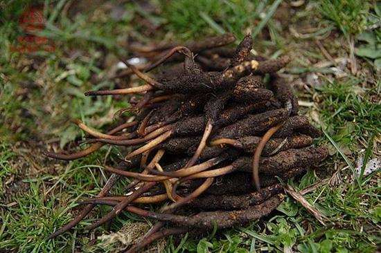 土壤中常见动物