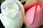 七彩花卉鲜花