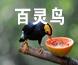 百灵鸟橱柜