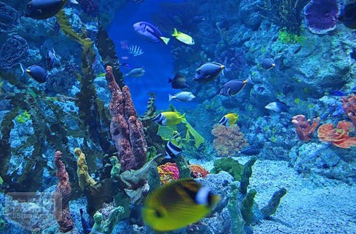海洋国际旅行社