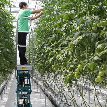 寿光蔬菜产业