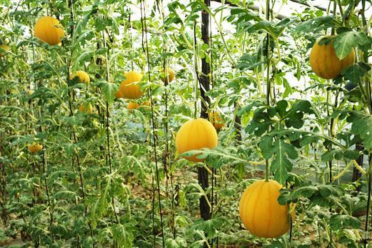 福大农业发展