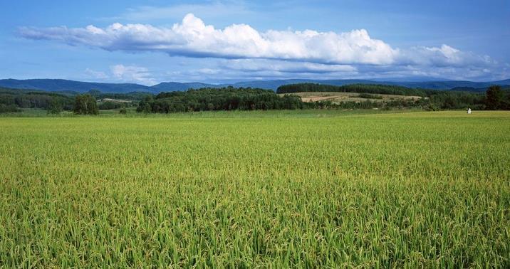 达富农牌绿色农业加盟