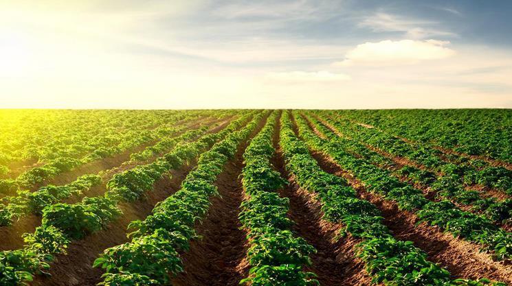 绿色谷农业产品...<a href=