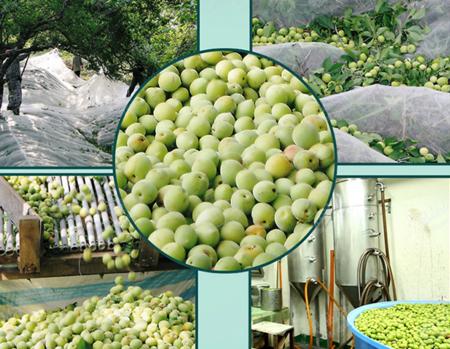 泸沽湖绿色食品
