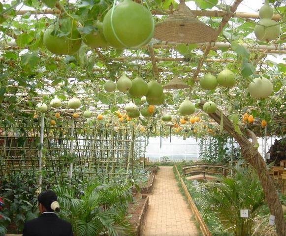 绿祥源生态农业