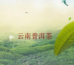 云南普洱茶