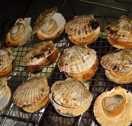 扇贝王海鲜烧烤