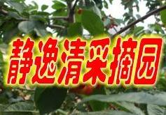 北京静逸清采摘园