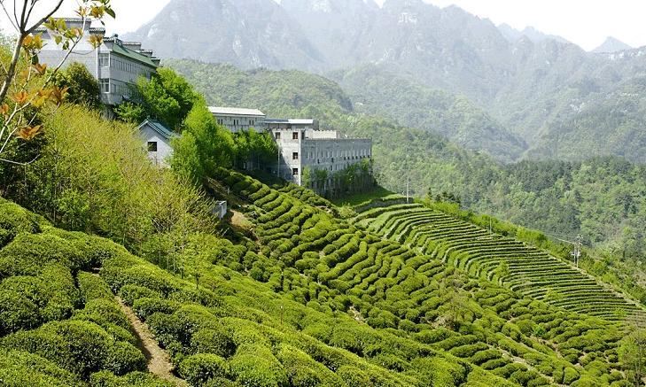 八仙观茶叶加盟