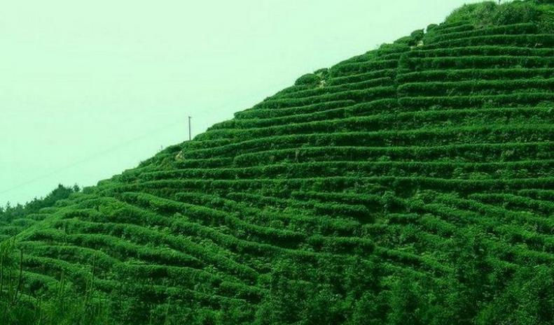 天印贡茶加盟