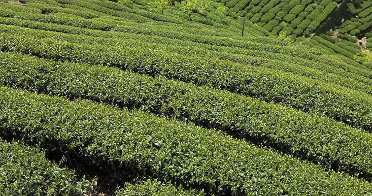 土司贡茶加盟