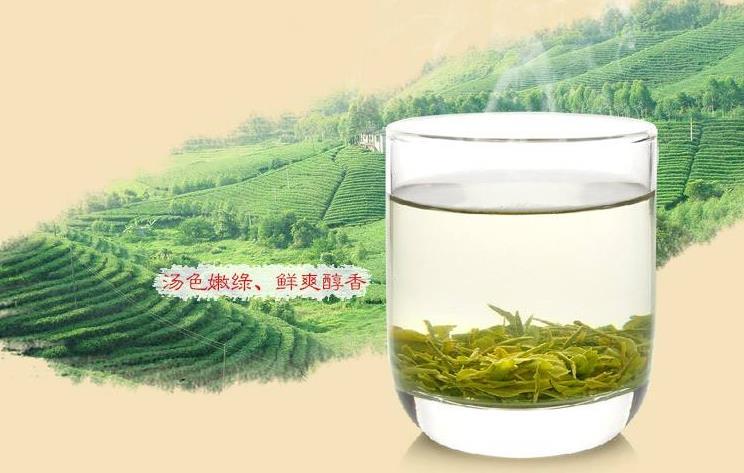仙醇茶叶加盟