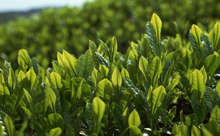 青山绿水茶叶加盟