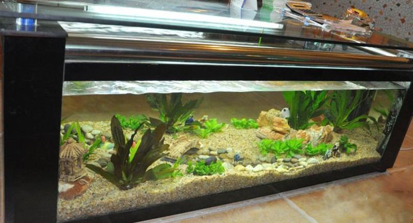 水绘典藏鱼缸加盟