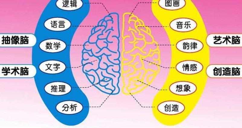 门萨全脑教育加盟