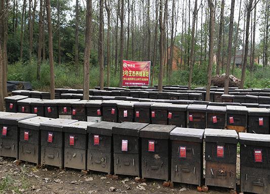 中华土蜂蜜养蜂基地