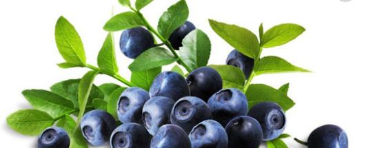 野生蓝莓果汁饮料加盟