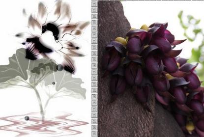 紫藤农家乐