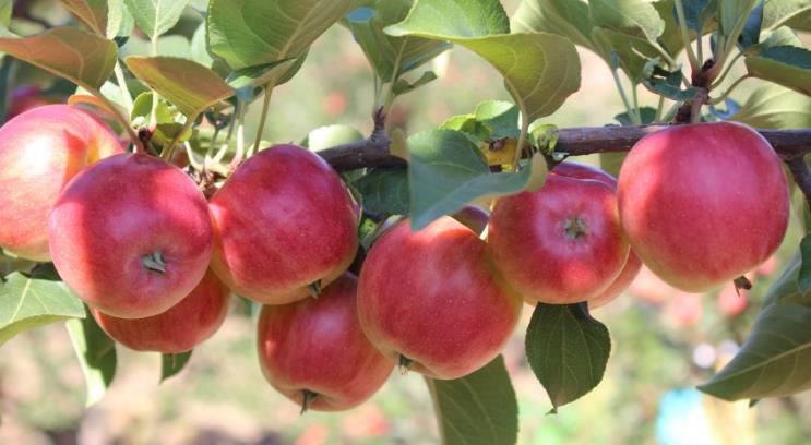绿色食品水果