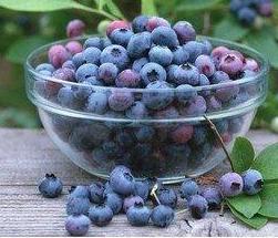 加拿大冷冻蓝莓