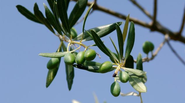 希腊橄榄油加盟