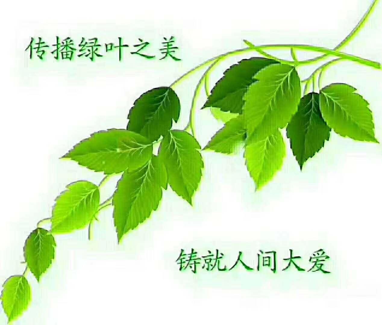 苏州绿叶日用品有限公司