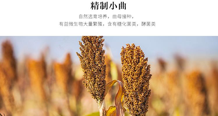 中国劲酒优质选材