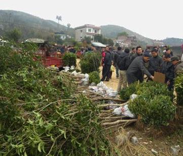 九州绿苑苗木交易平台市场