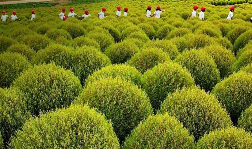 九州绿苑苗木交易平台种植