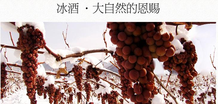 酿造法国红酒的葡萄