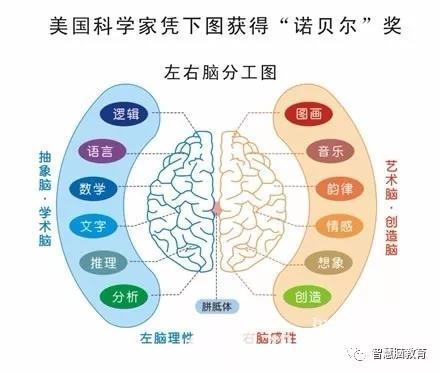 左右脑功能图-全脑教育发展简史