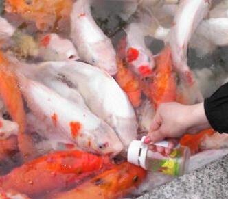 鱼你同乐吃奶鱼