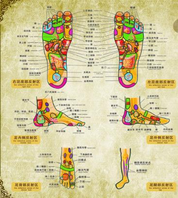足疗脚底穴位图
