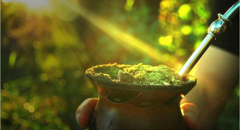马黛茶天然无污染 绿色健康