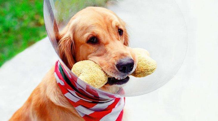 宠物狗狗护理