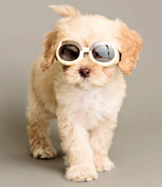 宠物狗狗装扮