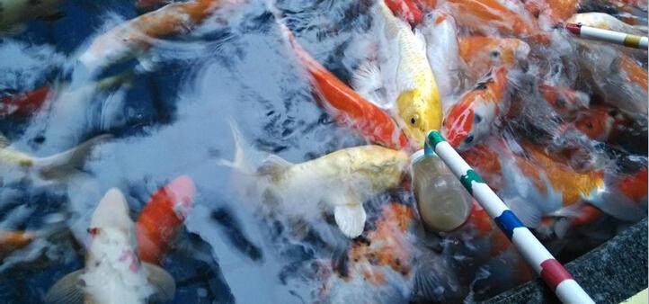 鱼你同乐喂鱼场景