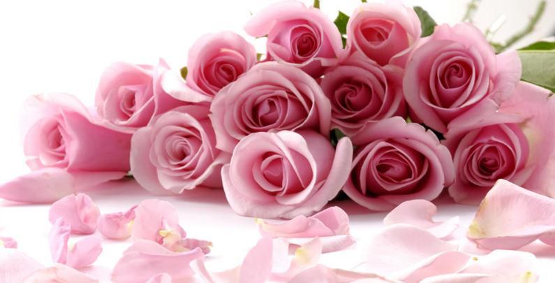 七彩花艺培训粉色玫瑰