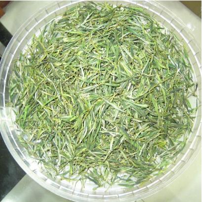 安吉绿茶 茶叶