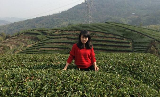 六妙白茶图片