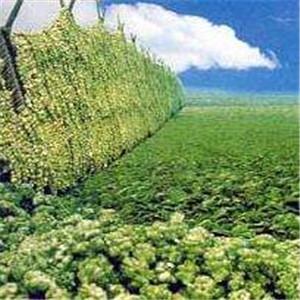 涪陵榨菜生产基地