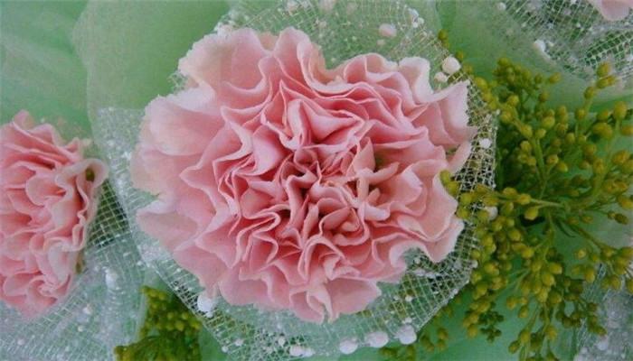 卉和水玫瑰花本水加盟