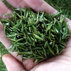 竹叶青茶健体