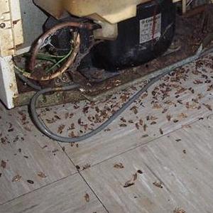 美乐虫控杀蟑螂