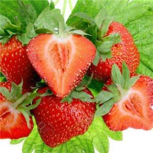 桉荭贸易草莓