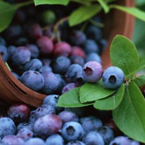 百果香水果蓝莓