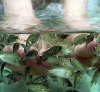 亲亲按摩鱼