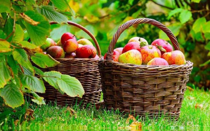 亲亲果园苹果