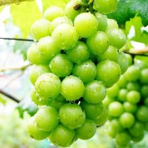 百果香便利店葡萄